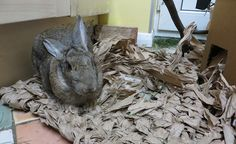 How to weave packing paper into a lovely new mat for your bunny, perfect for sitting on and fun to shred! Bunny Cages, Rabbit Cages, House Rabbit, Rabbit Toys, Meat Rabbits, Raising Rabbits, Bunny Rabbits, Diy Bunny Toys, Animal Rescue League