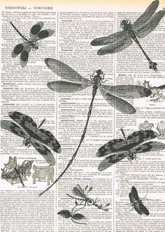 Dragonflies.Book Page Print.Vintage by studioflowerpower on Etsy, $8.50