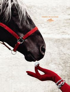 the way to a women's heart is through her horse :)
