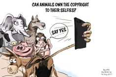 #Cartoon of the Week: Can animals own the #copyrights to their #selfies? #Mobile #Tech #Smartphone #Android #Iphone #Apple #Tech #Technology #News
