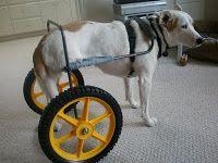 Home-made dog wheelchair