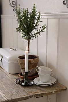 Rosemary in old terracotta, rough wood table, whites...