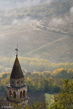 autumn in the vineyards under the medieval city of Motovun, Istria, Croatia