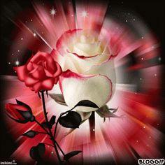 Have a beautiful çiçek gifs Flowers Gif, Beautiful Rose Flowers, Beautiful Gif, Beautiful Flowers, Roses Gif, Gif Pictures, Love Pictures, Beau Gif, Love You Images