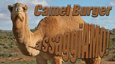 #camel #burger #camelburger #australia #australian #assaggiamo #tasting #taste