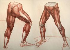Exceptional Drawing The Human Figure Ideas. Staggering Drawing The Human Figure Ideas. Leg Anatomy, Human Body Anatomy, Anatomy Poses, Muscle Anatomy, Anatomy Study, Anatomy Art, Anatomy Drawing, Leg Muscles Anatomy, Leg Reference
