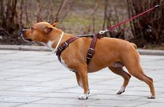Harness | Various Types of Dog Training Collars
