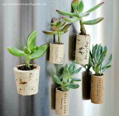 Magnet planter