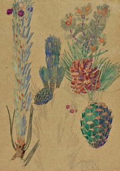 muted pine cones of Charles Rennie Mackintosh (Scottish architect, designer, watercolourist, artist, Charles Rennie Mackintosh, Botanical Drawings, Botanical Illustration, Botanical Prints, Illustration Art, Fleurs Art Nouveau, Museum Art Gallery, Glasgow School Of Art, Glasgow Girls