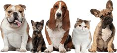 Pet Wellness Package or Two or Three Nights of Pet Boarding at Homestead Animal Hospital (Up to Off) Dog Clinic, Animal Clinic, Pet Dogs, Dog Cat, Pets 3, Pet Pet, Buy Pets, Group Of Cats, Animal Letters