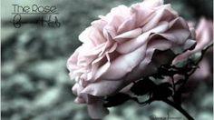 francoise hardy the rose - YouTube