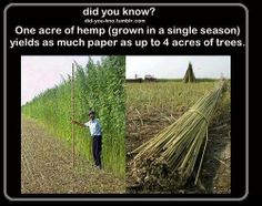 The question that remains is why are they cutting down the trees then?