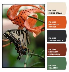 ‿✿⁀ White and black butterfly on orange tiger lily flower ‿✿⁀ ColorSnap by CNH