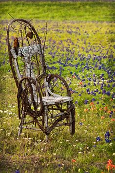 Old chair wrapped in grape vine