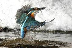 Bildergebnis für photographers of nature