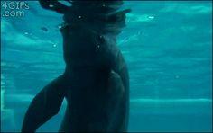 Sociolatte: Dolphin's Playing [Gif]