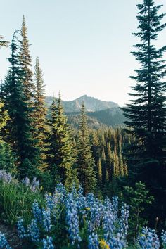 I want to go hiking here with this beautiful view of nature. - - Lisa - I want to go hiking here with this beautiful view of nature. - I want to go hiking here with this beautiful view of nature. Landscape Edging, Landscape Art, Landscape Paintings, Acrylic Paintings, Landscape Lighting, Vista Landscape, Irish Landscape, Chinese Landscape, Landscape Quilts