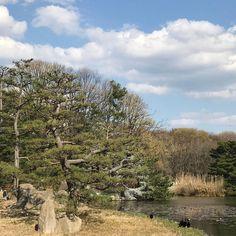 Teruyuki Fujiiさん(@teruyuki_fujii)のInstagramアカウント: 「#FavoritePlace #桜満開 は来週末位かな? #今日の平和 #PeaceForToday #today #peace #sky #osaka #japan #今日 #平和 #空 #大阪…」