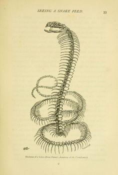 Snakes : - Biodiversity Heritage Library