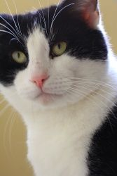 21 Best Adorable Adoptable Kitties Images Adoption Foster Care