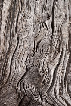 thinking about wood Photo Texture, Wood Texture, Texture Art, Natural Texture, Natural Forms, Patterns In Nature, Textures Patterns, Performance Artistique, Art Grunge