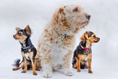 Is Your Dog Younger Than You Think?...  take a look at the video