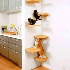 How To Make Floating Shelves and Install Them Tutorial. :P Here kitty kitty!
