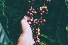 New free stock photo of hand water fruits - Stock Photo