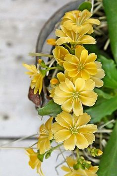 Pretty yellow flowers