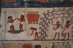 An official named Nakht wanted to make sure he'd have something nice to drink in the great beyond. His tomb paintings include scenes of harvesting grapes and pressing the fruit by foot to make wine, which was stored in tall ceramic jars with handles. Photograph by Kenneth Garrett.