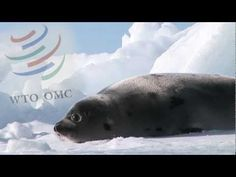 Click here to learn more about IFAW's campaigns to protect the seal population.