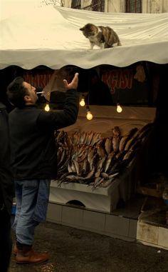 Fish #Bazaar (Photo: Volkan Kavak)