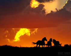 Three Horse Silhouette - Flint Hills Region of Kansas Rode 2012 Bucket List - Check Cool Pictures, Cool Photos, Flint Hills, State Of Kansas, Horse Silhouette, Horse Photography, Country Living, Sunsets, Places To See