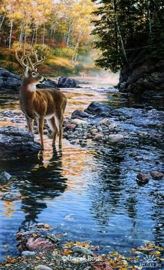 Deer Hunting Tips and Tricks. Venison Stew Recipe And A Great Deer Jerky Recipe. Wildlife Paintings, Wildlife Art, Animal Paintings, Landscape Paintings, Deer Photos, Deer Pictures, Nature Pictures, Beautiful Paintings, Beautiful Landscapes