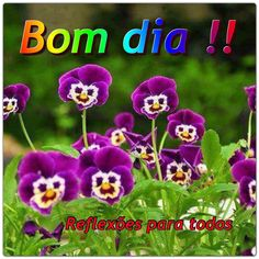 """Acesse: """"Pessoas são como as flores"""" #flores #BomDia"""