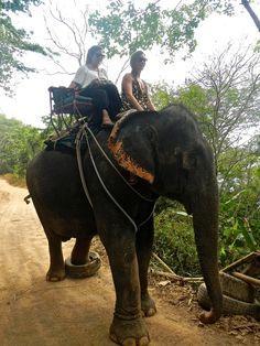 What to do in Phuket: Elephant ride in Phuket Thailand Phuket Thailand, Thailand Travel, Asia Travel, Phuket Resorts, Hotels And Resorts, Top Hotels, Thailand Elephants, Elephant Ride, Patong Beach