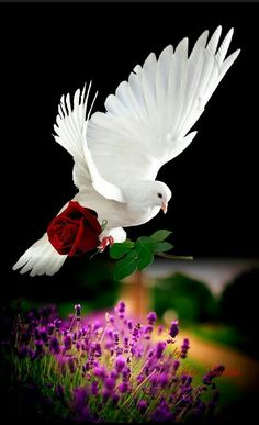 Znalezione obrazy dla zapytania good morning images in love symbol Dove Images, Dove Pictures, Beautiful Love, Animals Beautiful, Beautiful Pictures, Latest Good Morning Images, Beautiful Nature Wallpaper, White Doves, Belle Photo