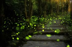 6 Fun Facts You Didn't Know About the Elkmont Fireflies in the Great Smoky Mountains
