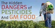 """Fed Up!"" — A Film About the Risks of GE Foods and the Industrial Food System"