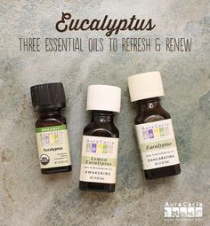 Need a winter pick-me-up? Eucalyptus has you covered! Try these recipes now. #refreshandrenew
