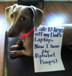 An epic gallery of 30 best dog shaming pictures that prove these dogs are the naughtiest in the world. The best dog shaming photo gallery that features the most hilarious, most shameful, and never-before-seen puppy misdeeds. Funny Animal Pictures, Funny Animals, Cute Animals, Baby Animals, I Love Dogs, Cute Dogs, Dog Shaming Photos, Cat Shaming, Public Shaming