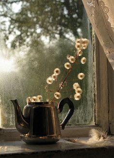 Tea Pot In Window