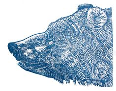 bear lino, amazing detail