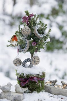 A gorgeous Christmas tree for our feathered little friends!