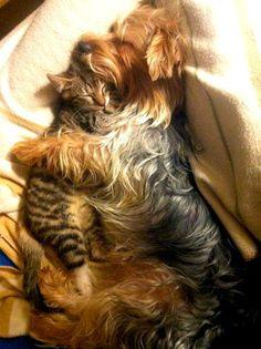 doggie cuddling kitty best friends while sleeping