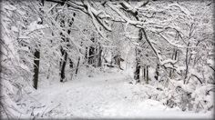 7 steps to a great winter walk