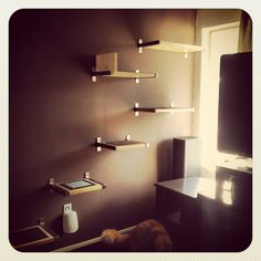 DIY cat shelves -As we seem to be going both decorating crazy and cat crazy 'round this house, we might have to try this (in the basement?)
