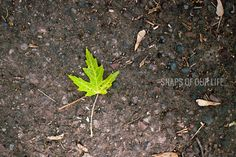 Love this gorgeous vibrant green leaf against the dark concrete from Beth at Snaps of Our Life.