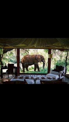 Take me back to Kenya