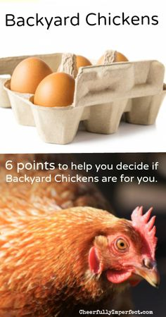 6 points to help you decide if backyard chickens are for you!